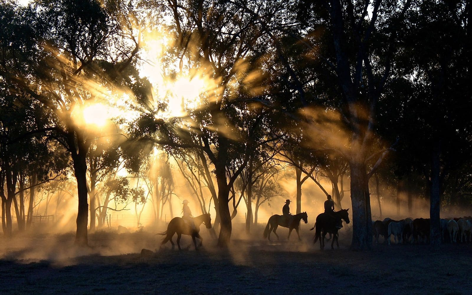 cowboy indien foret cheval coucher soleil